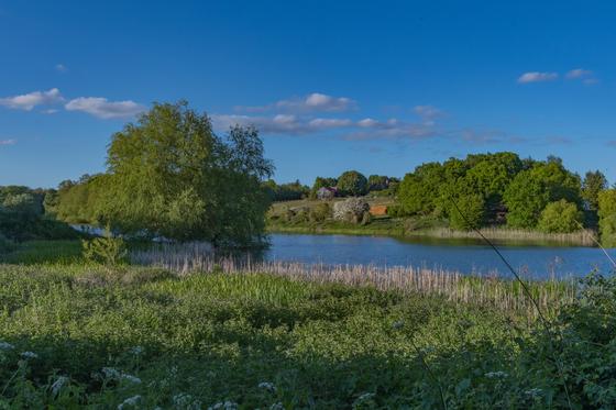 Evening around Alton Water
