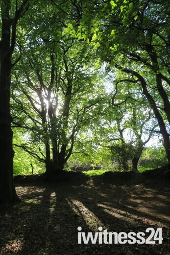 Evening walk in Core Wood
