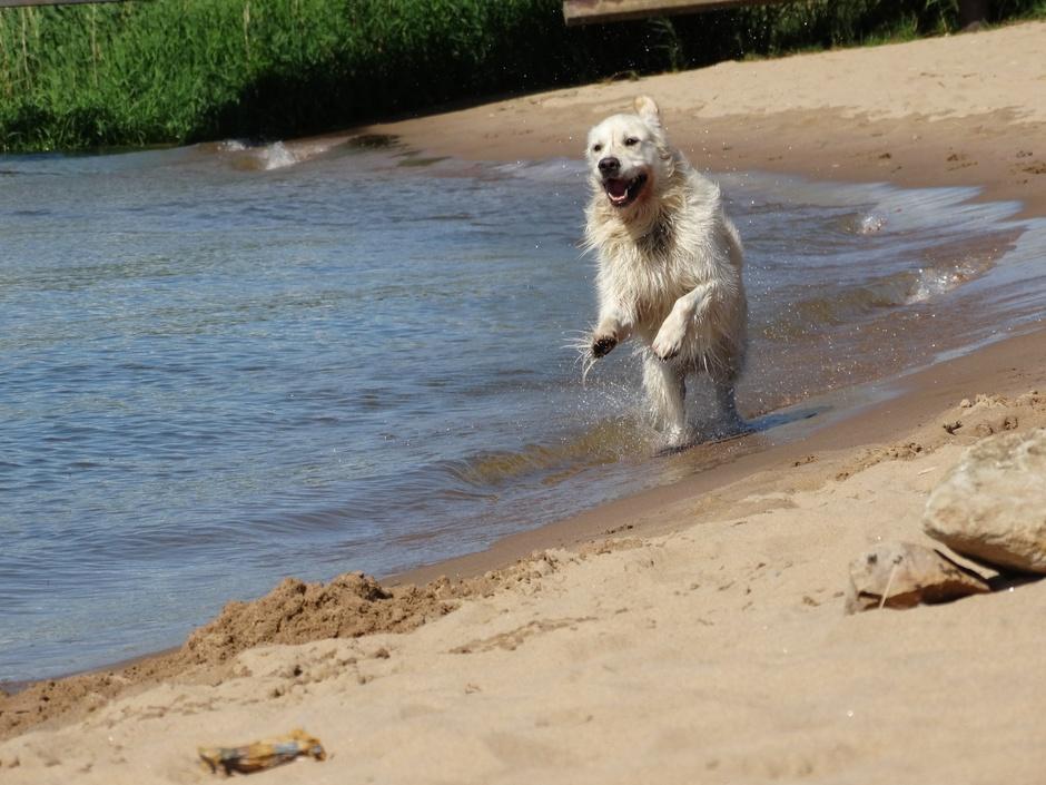 Lekker spetteren, rennen en in het zand graven.