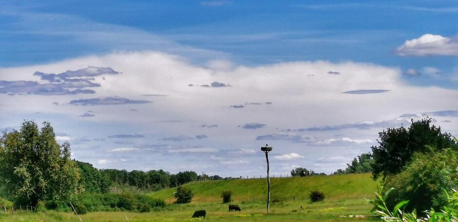 Ooievaar op het nest en steeds meer wolken