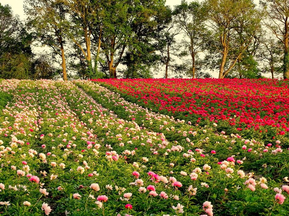 Voor iedereen een kleurrijke 2e Pinksterdag!