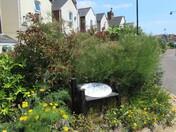 Exmouth Quay Gardens