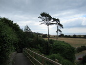 Morning walk down to The Maer