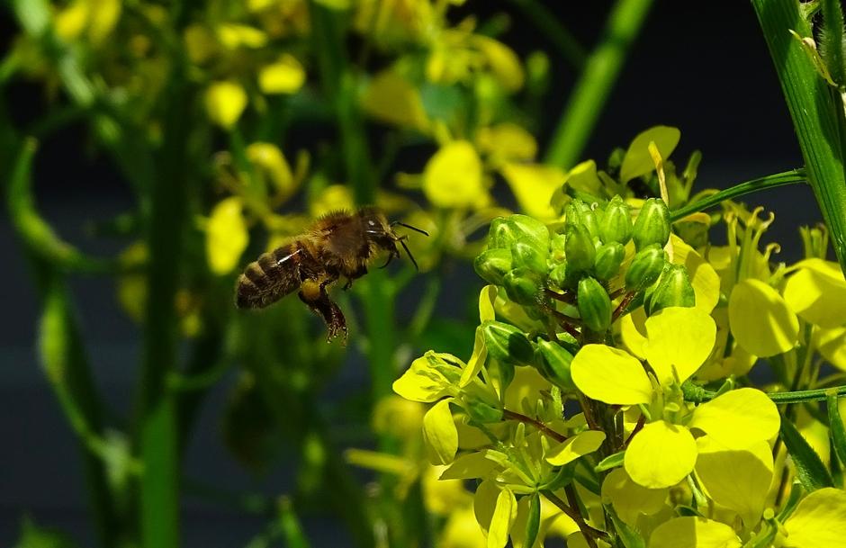 De bijen vliegen hier af en aan.. mooi om te zien!!