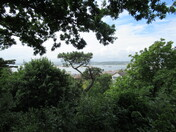 A sea-view between the trees