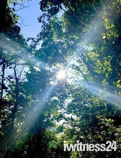 Sun Rays - Project 52