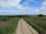A walk along Pebblebed Heaths