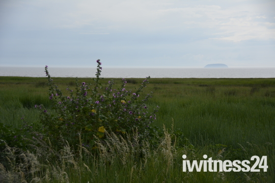 Flowers at Sand Bay