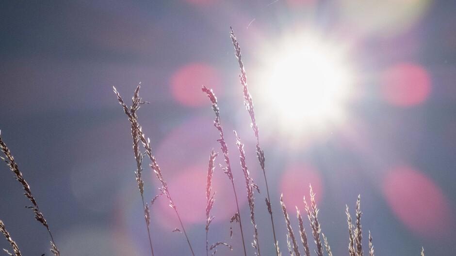 Zon zon en nog meer zon