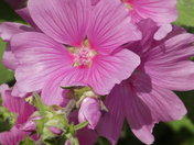Summer Flowers in our rear garden