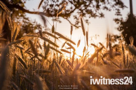 Sunset in the Norfolk fields
