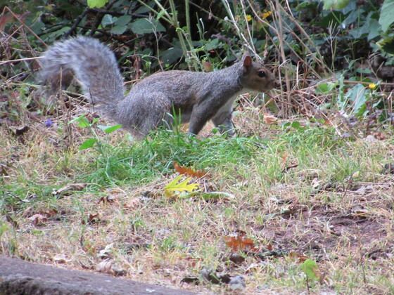 Wildlife along the footpath between manor Gardens and the sea-front
