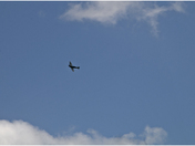 NHS fly past