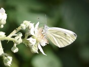 Lovely White Butterfly