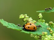 Lady Vs Ants