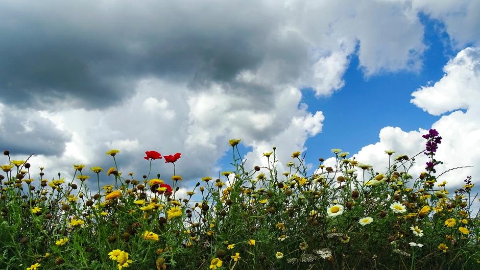 Wilde bloemen nog in bloei