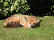 After hard night a nice sleep in the Sun