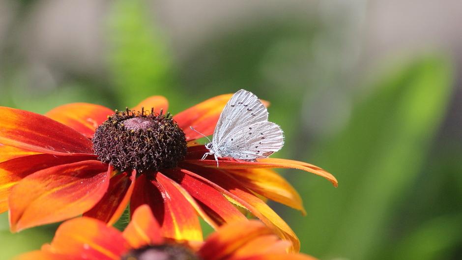 Zonnige zondag / veel vlinders vandaag