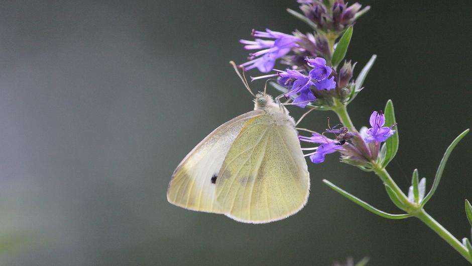 Zonnige dag en veel vlinders vandaag