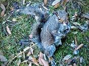 Posing Squirrel…