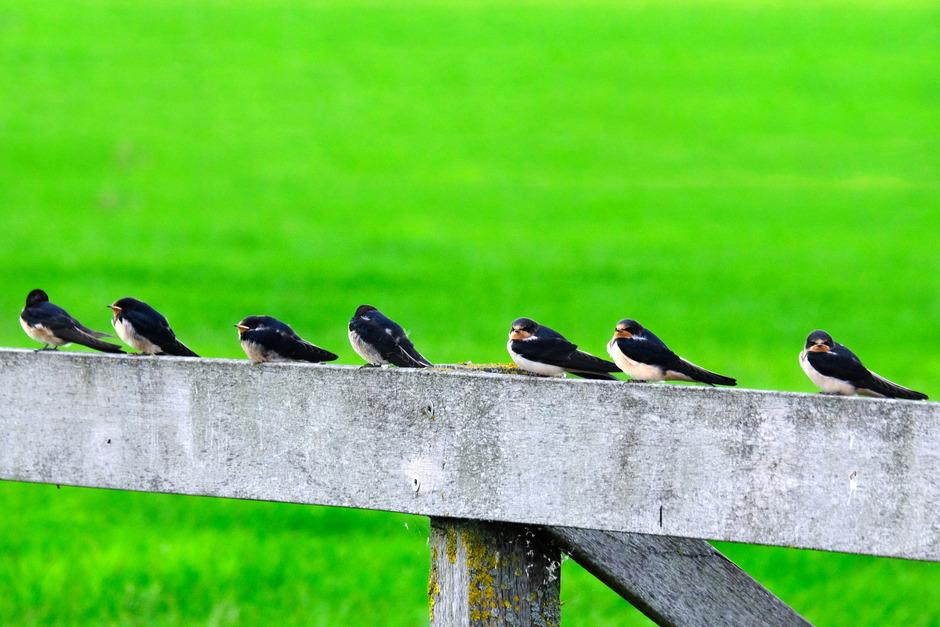 samen op een hek