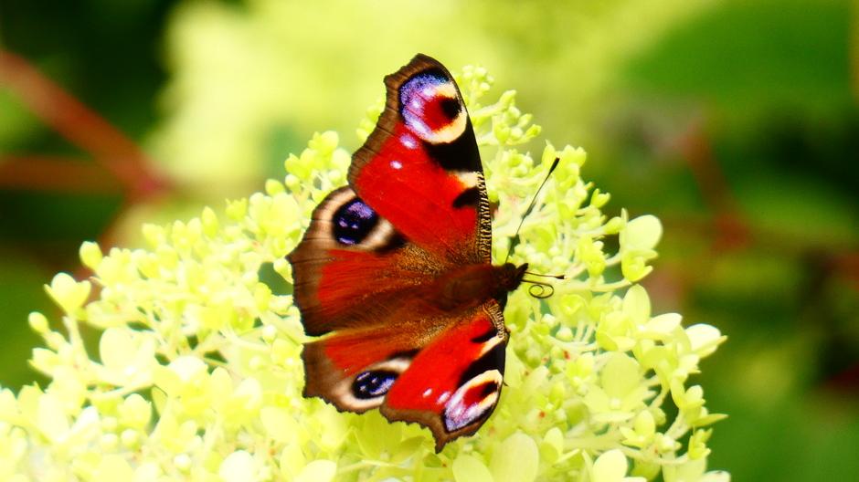 Rustig mooi vlinderweer