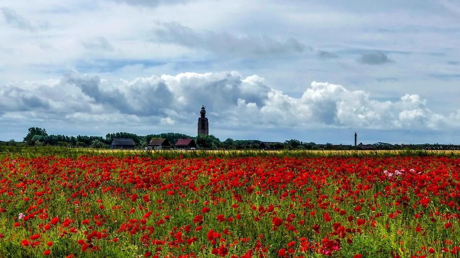 Stapelwolken zon en rode klaprozen
