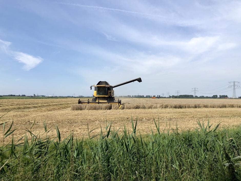 Prima zomerweer om de oogst binnen te halen