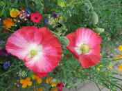Colourful flowers outside Exmouth Town Hall