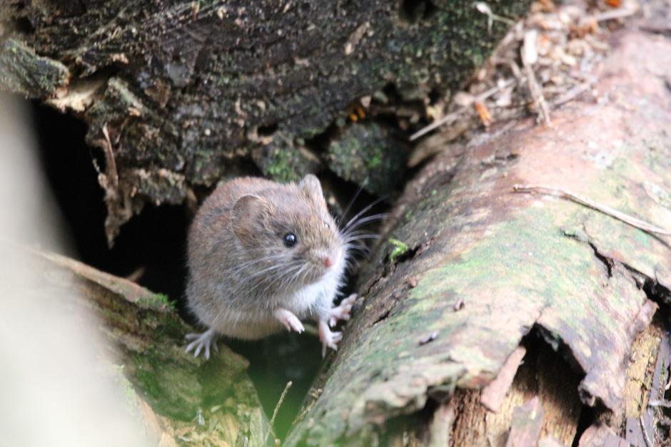 klein muisje