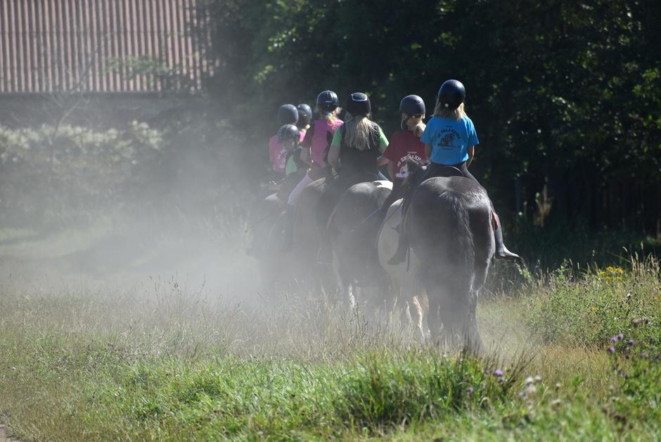 Paardenrit