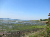 Exe Estuary at low tide from the Mudbank bird-hide footpath