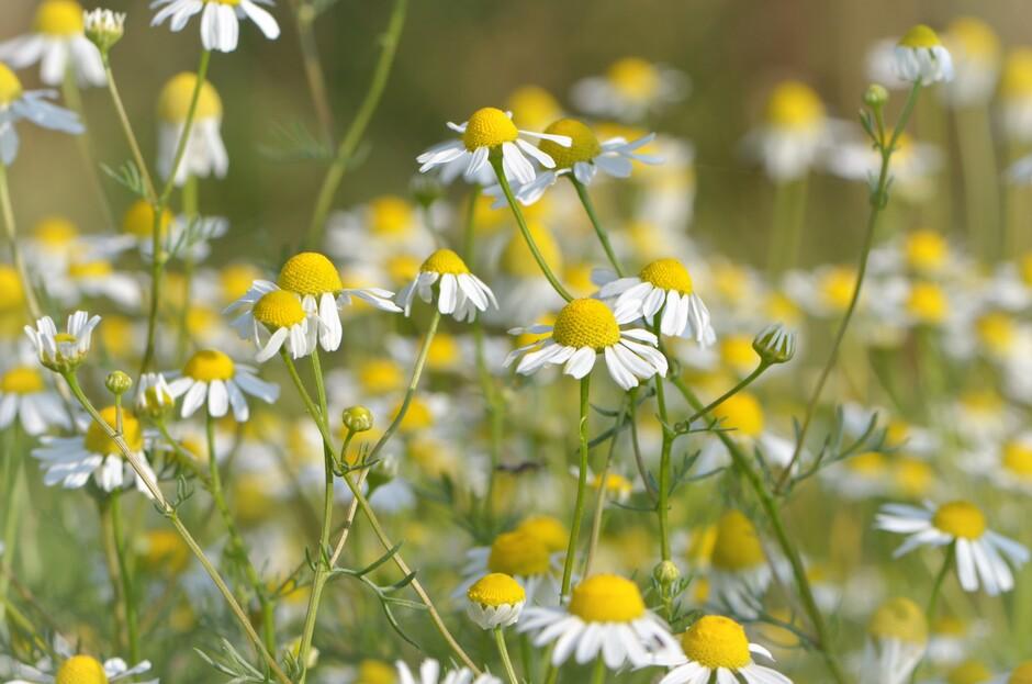 De natuur staat hier en daar nog mooi in bloei, maar heeft nu wel rap een regenbuitje nodig.