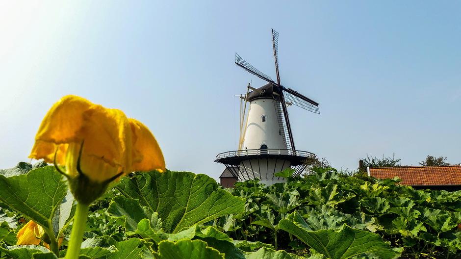 Zon warm en een bezweken bloem