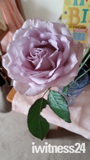 Beauty of the roses