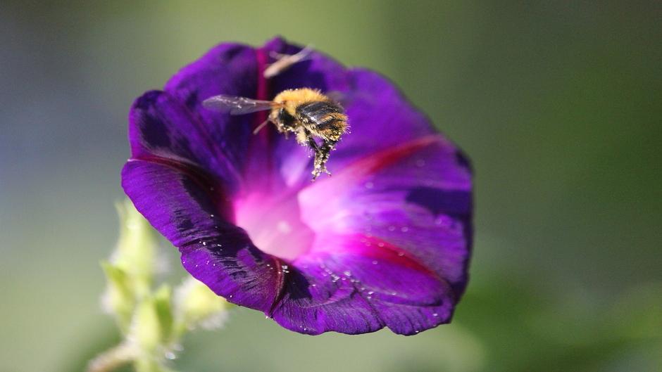 Zonnige dag, bijen vliegen af en aan