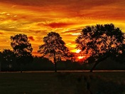 Sunrise over Hylands park