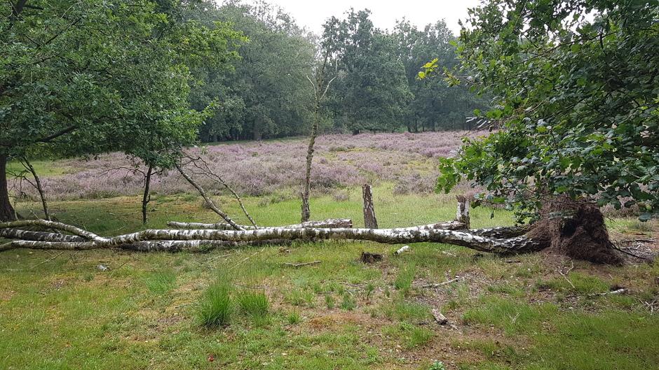 Na de storm omgewaaide bomen