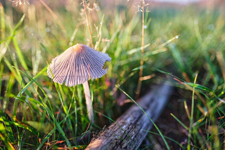 Eerste paddenstoel........ de herfst komt eraan.