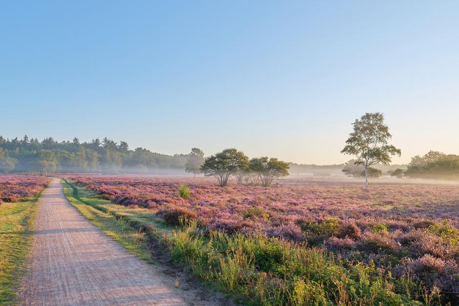 Vlagen van mist vanochtend vroeg bij zonsopkomst.