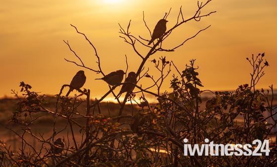 September Sparrows
