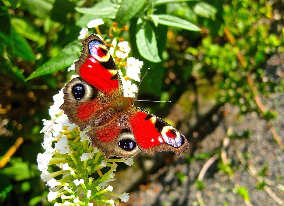 Dinsdag vlinderdag