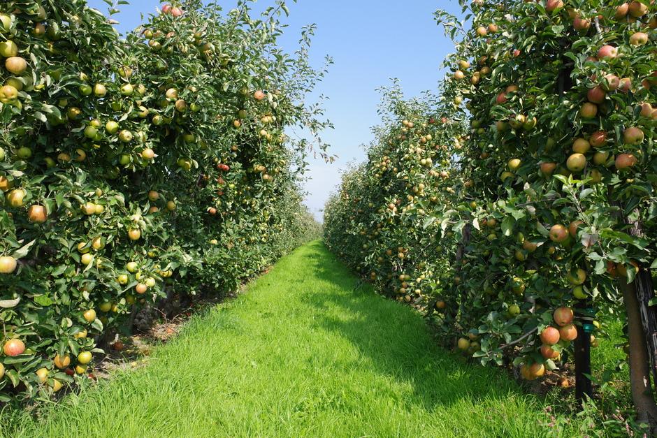 Oneindig veel appels op deze zonnige dag