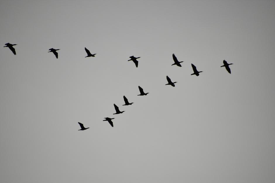 Vogeltrek.