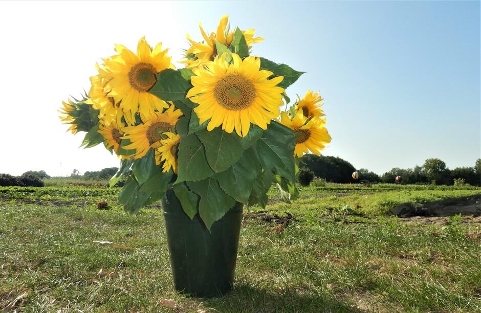 ...De zonnebloemen...