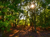 Beautiful Bungay Common