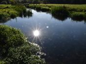 Beside the River Waveney