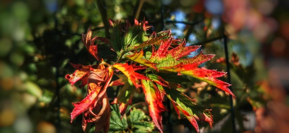 Zomers weer en herfst