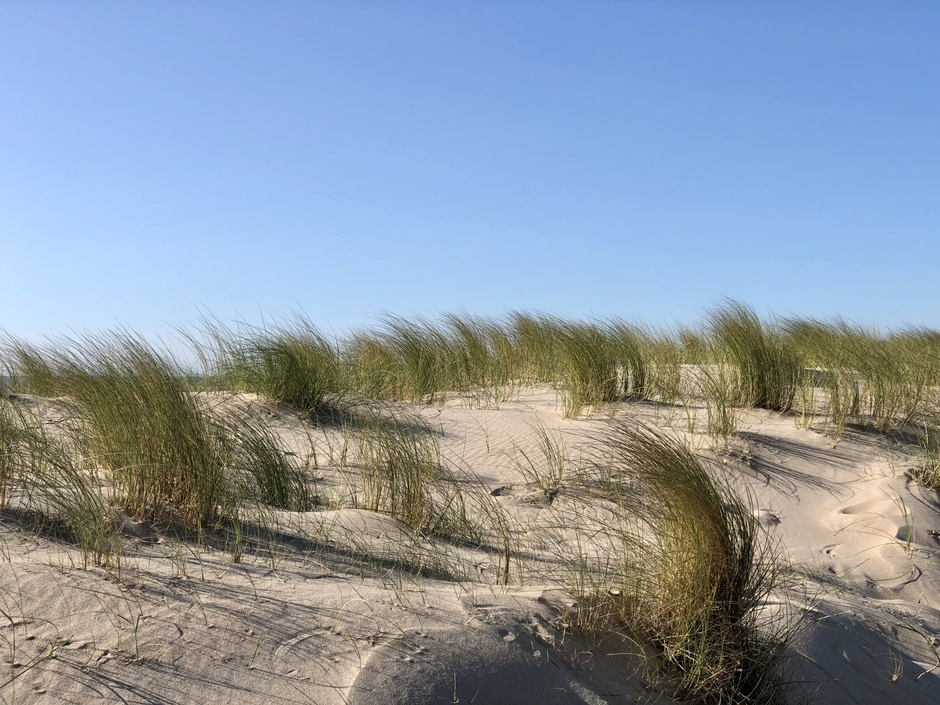 Verfrissend windje in de duinen 2e maasvlakte