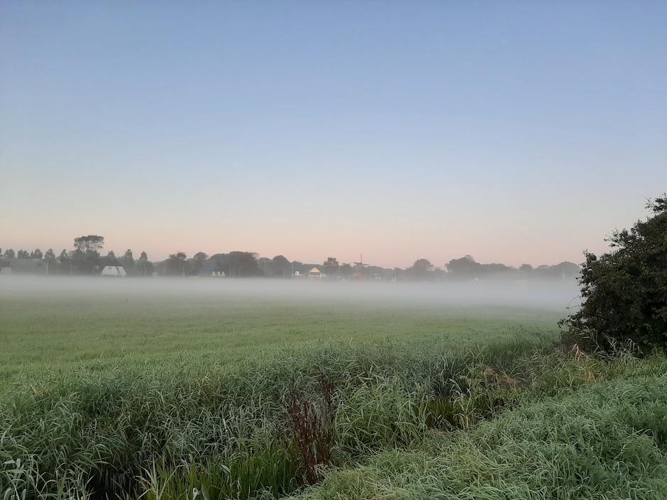 Mist boven het weiland